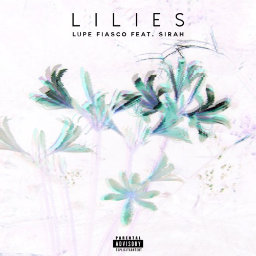 lupe-lilies-500x500